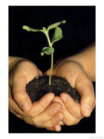 432307hands-holding-seedling-posters.jpg